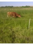 Wetland Pasture Mixture