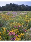 Conserve Pollinator Meadow Mixture