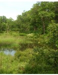 Conserve Wetland Mixture