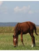 Horse Pasture Mixture