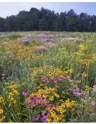 Conserve Pollinator Meadow Mixture