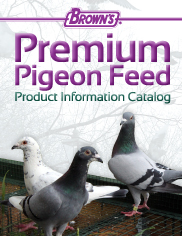 Pigeon Catalog