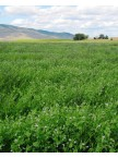 Alfalfa and Clover Inoculant