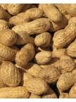 Raw-In-Shell Peanuts