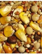 Breeder Small Corn