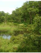 Conserve Wetland Mixture
