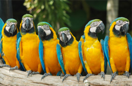 Parrot & Macaw