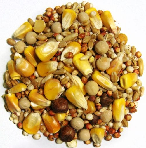 Breeder Small Corn-1461