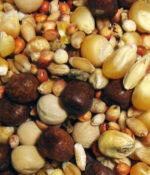 Breeder Popcorn-0