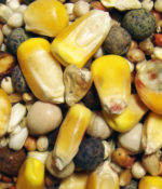 Developer Small Corn-0