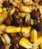 Maintenance Small Corn (European Style)-0