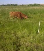 Wetland Pasture Mixture-0