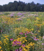 Conserve Pollinator Meadow Mixture-0