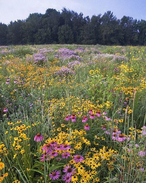 Conserve Pollinator Meadow Mixture-0
