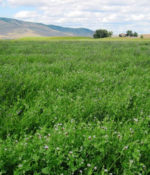 Alfalfa and Clover Inoculant-0