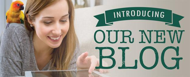 Introducing Our New Blog!